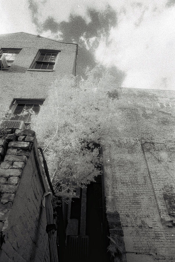 A Tree Grows In New Orleans Photograph
