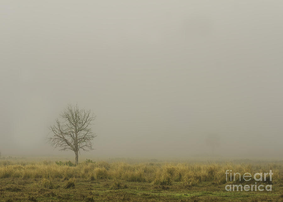 Nature Photograph - A Tree In Sunrise Fog by Cindy Bryant