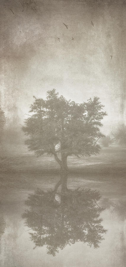 A Tree In The Fog 3 Photograph