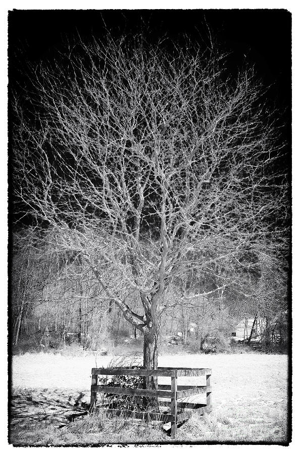 A Tree In The Snow Photograph - A Tree In The Snow by John Rizzuto