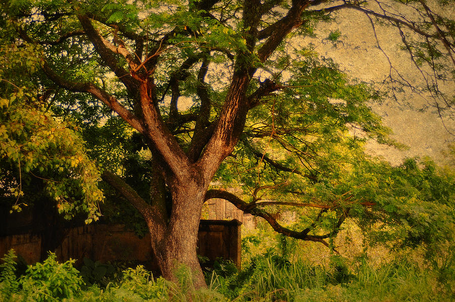 Tree Photograph - A Tree by Jenny Rainbow