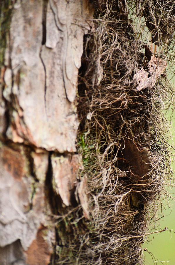 Tree Photograph - A Treetrunk Abstract by Maria Urso