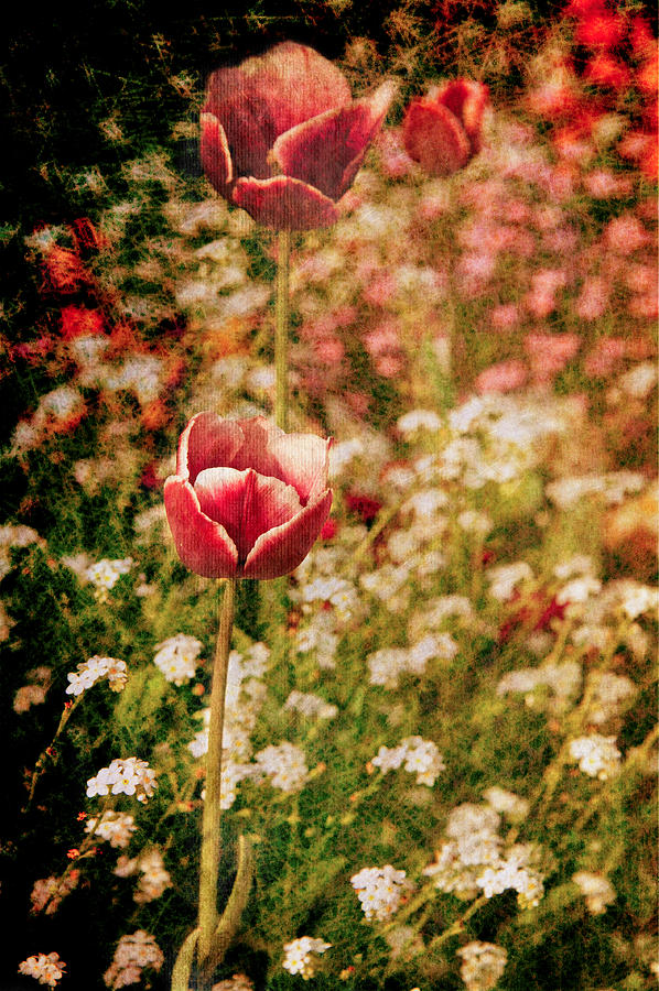 Photo Photograph - A Tulips Daydream by Loriental Photography