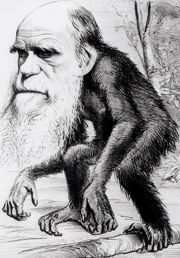 Evolutionary Painting - A Venerable Orang Outang by English School