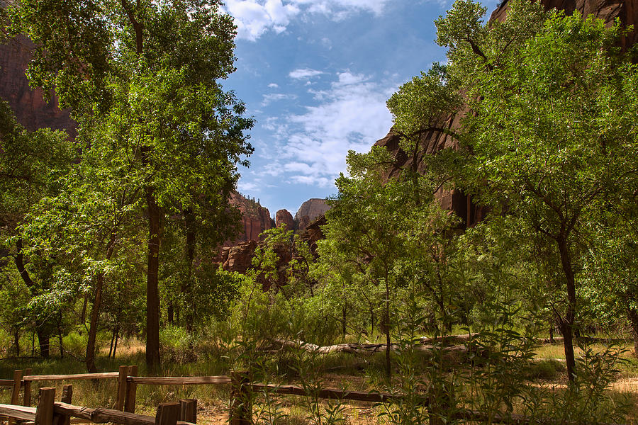 A Verdant Valley in Zion Canyon by John M Bailey