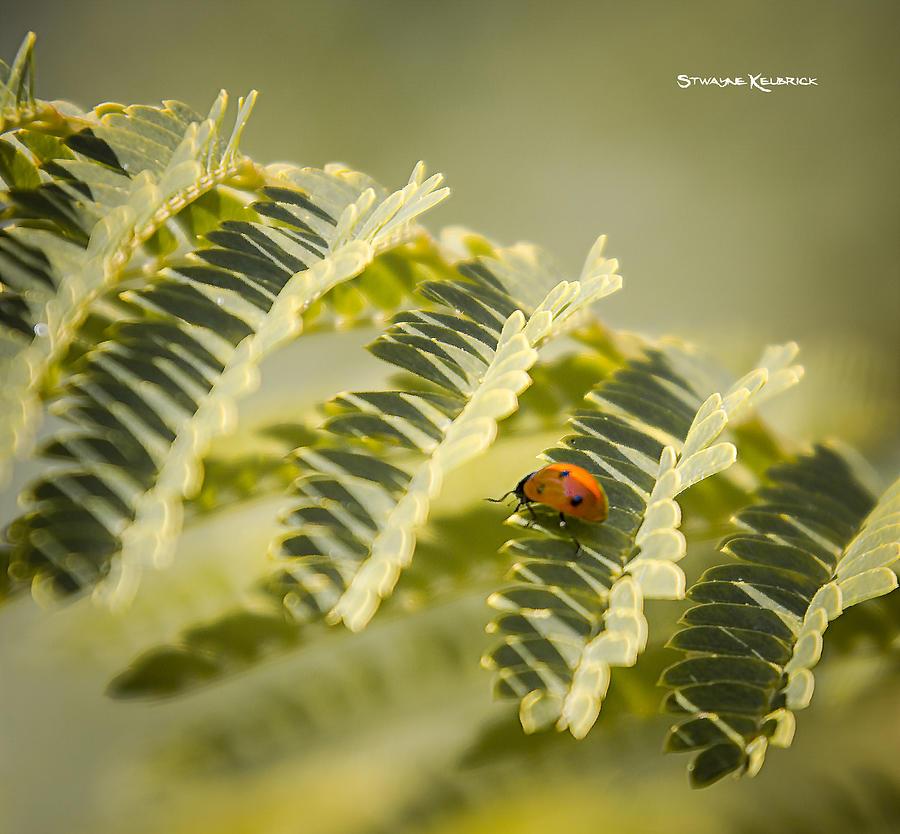 Ladybug Photograph - A very long way to the top by Stwayne Keubrick