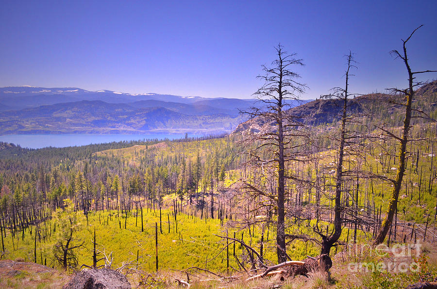 Mountain Photograph - A View From Okanagan Mountain by Tara Turner