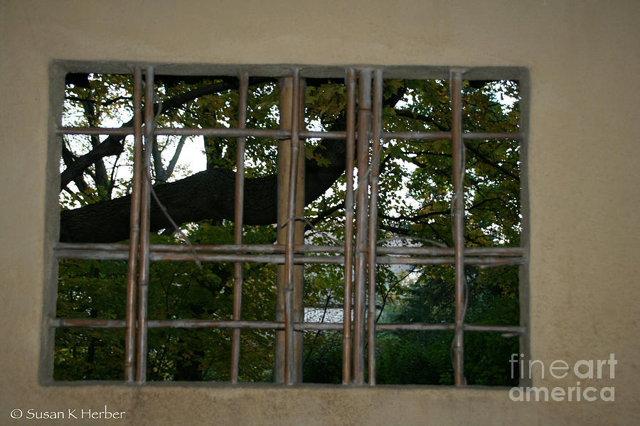 Window Photograph - A View by Susan Herber