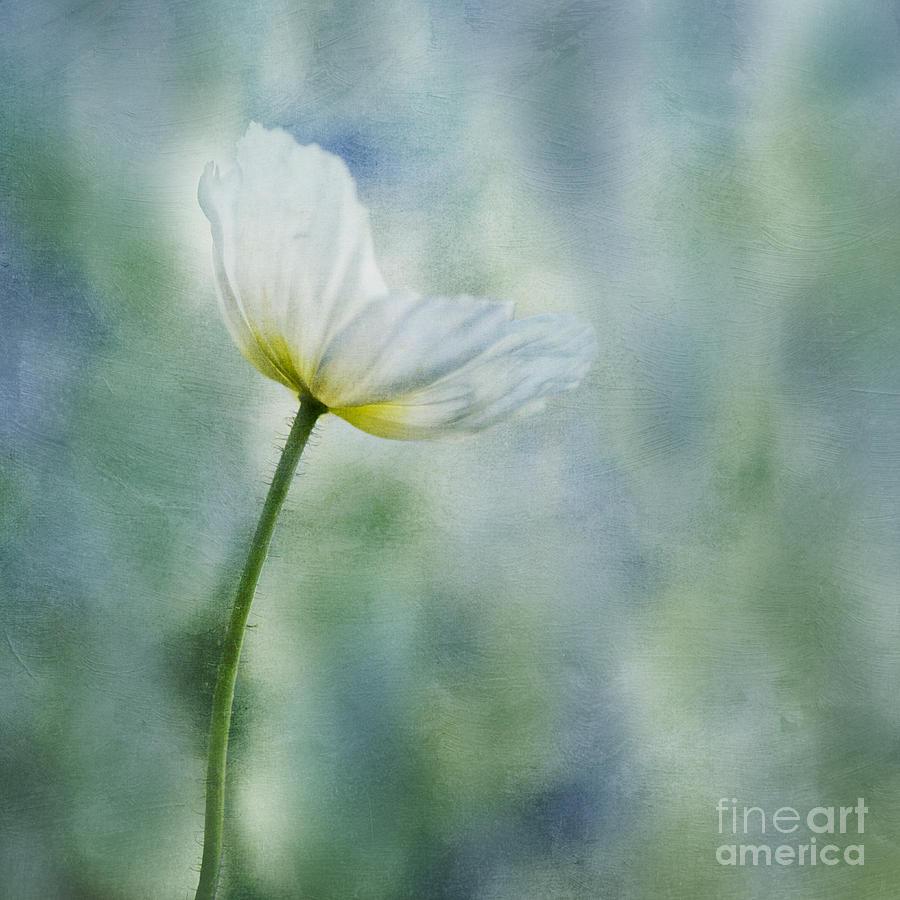 Poppy Photograph - A Vision Of Delight by Priska Wettstein