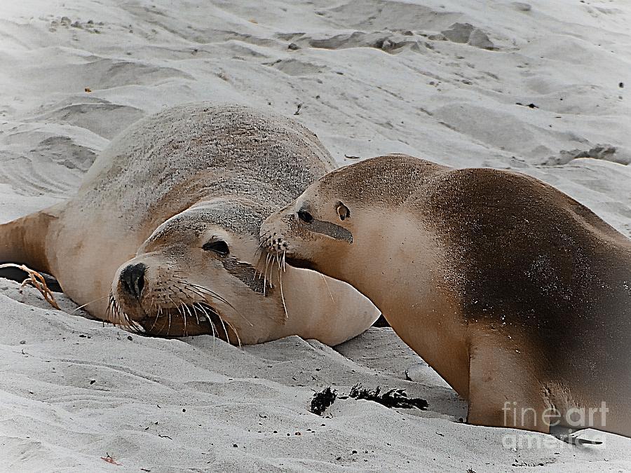 Animal Photograph - A Wake Up Kiss by Ben Yassa