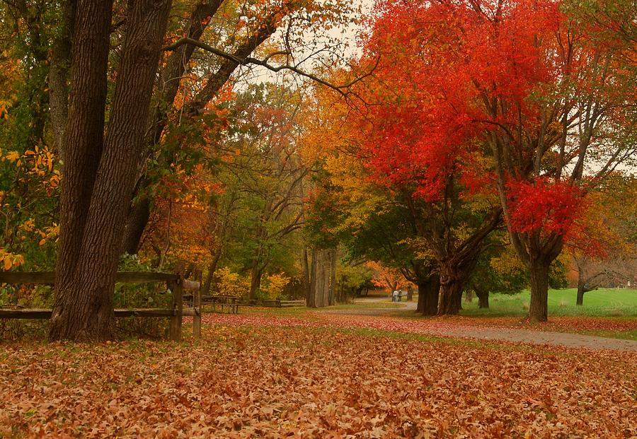 Autumn Photograph - A Walk In Autumn - Holmdel Park by Angie Tirado