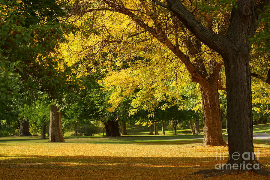 Parks Photograph - A Walk In The Park by Jeffery L Bowers