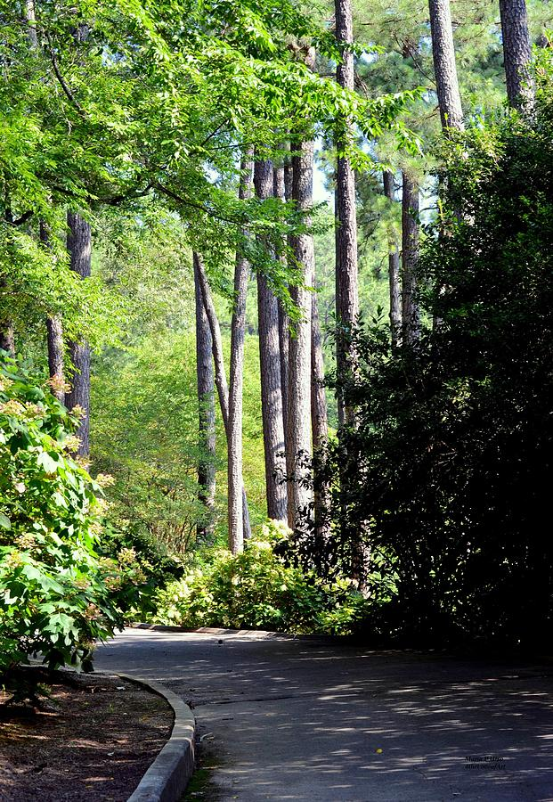 A Walk In The Shade Photograph - A Walk In The Shade by Maria Urso