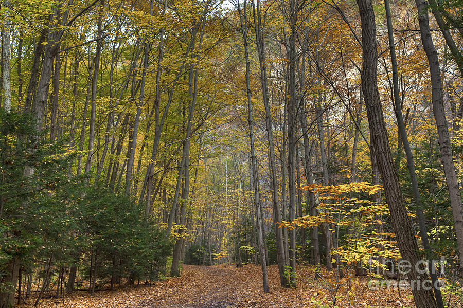 Michele Photograph - A Walk In The Woods II by Michele Steffey