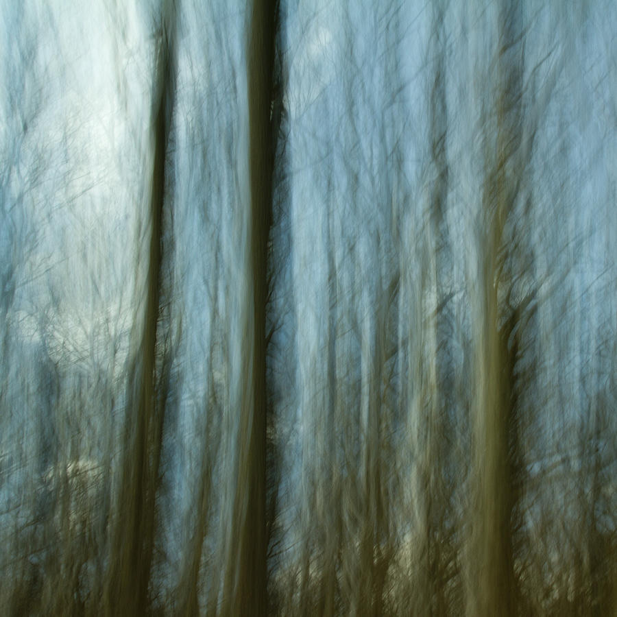Impressionist Photograph - A Walk In The Woods IIi by Bob Retnauer
