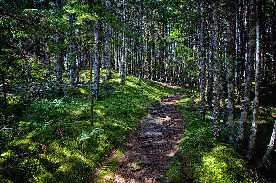 Maine Photograph - A Walk In The Woods by John Haldane