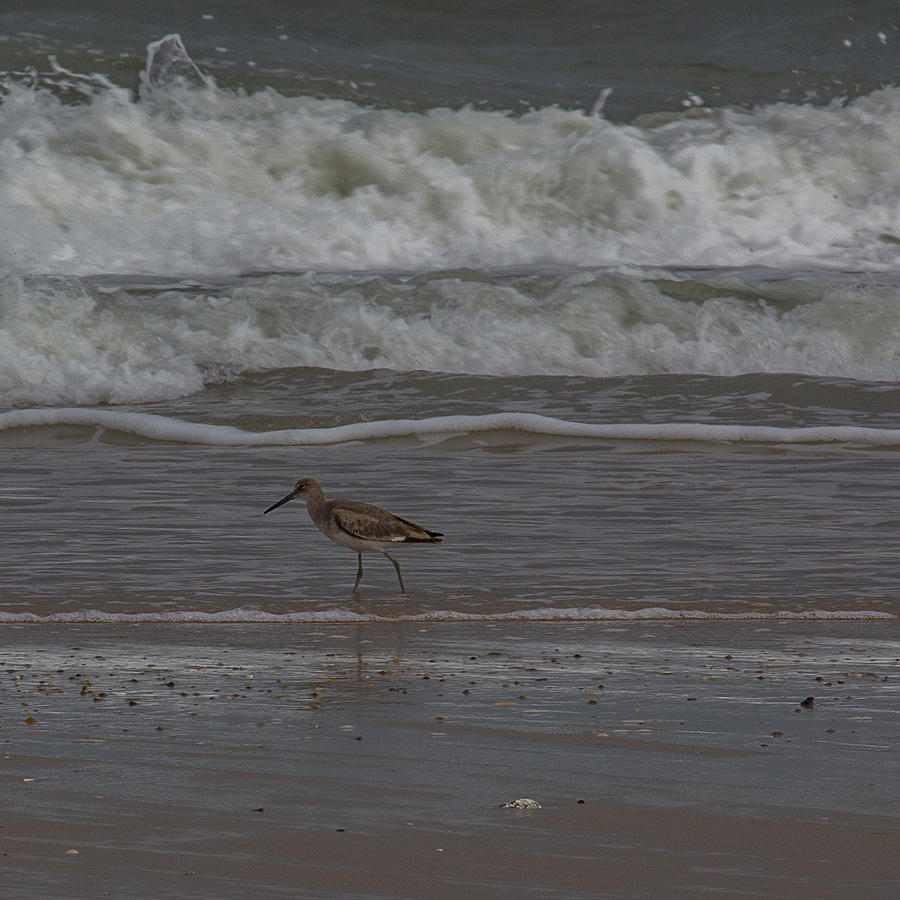 Sand Piper Photograph - A Walk On The Beach by Anita Miller