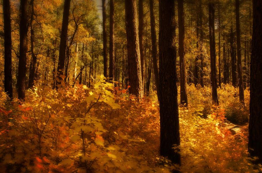 Fall Photograph - A Walk Through The Woods  by Saija  Lehtonen