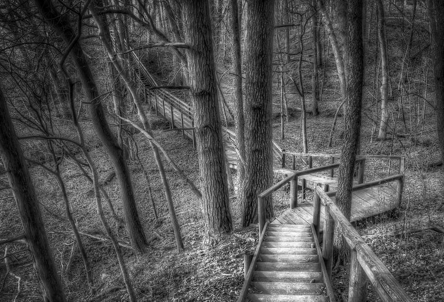 A Walk Through The Woods Photograph