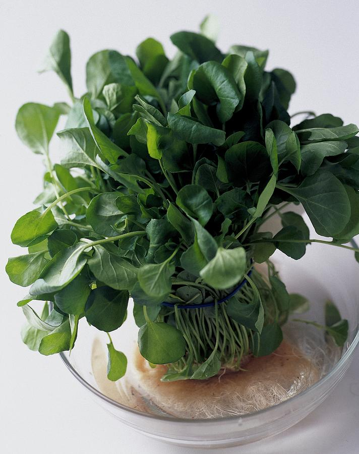 A Watercress Plant In A Bowl Of Water Photograph by Romulo Yanes