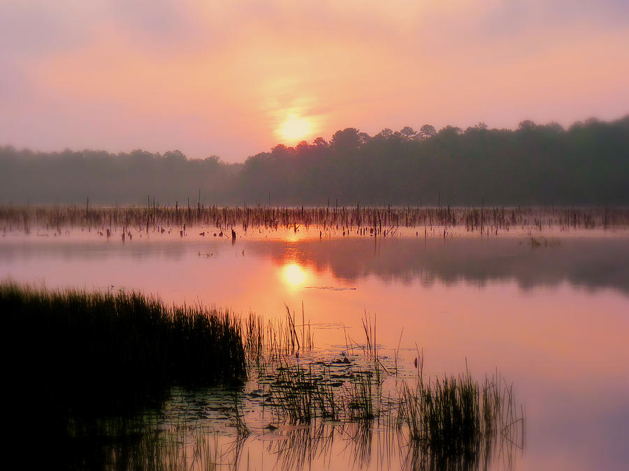 Alabama Photograph - A Wetlands Sunrise by JC Findley
