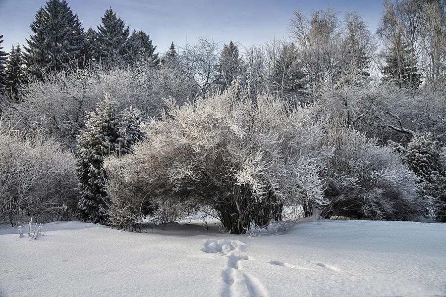 Landscape Photograph - A Winter Day 2 by Vladimir Kholostykh