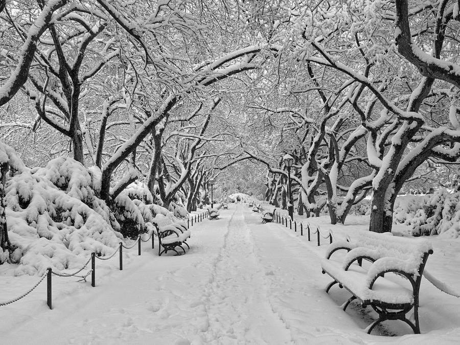 Central Park Photograph - A Winter Garden by Cornelis Verwaal