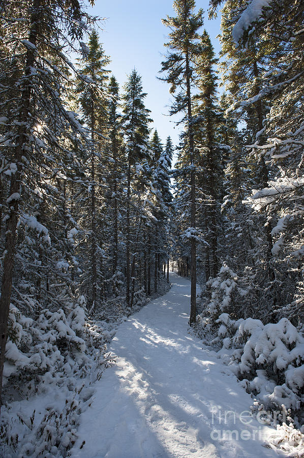 Nikon Photograph - A Winter Poem.. by Nina Stavlund