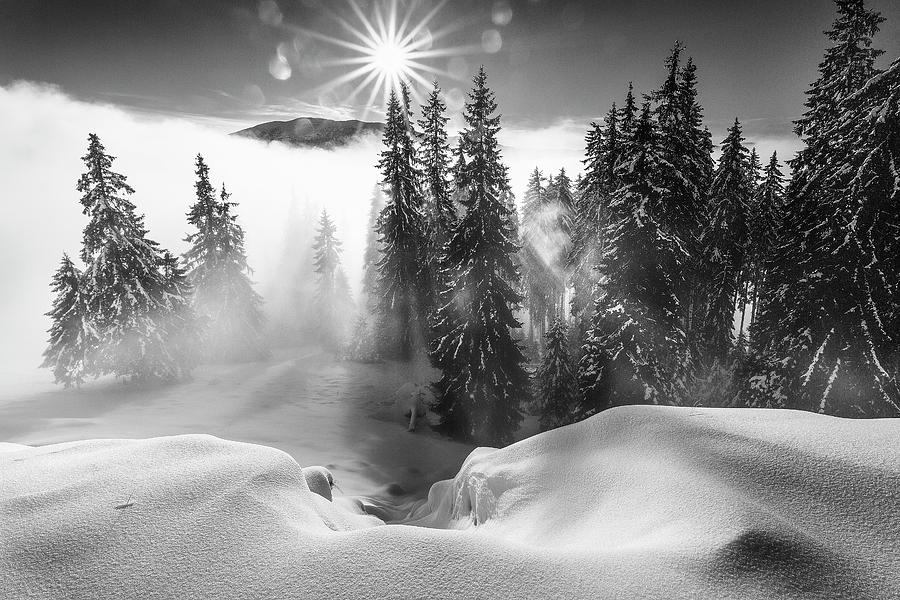 Winter Photograph - A Winter Tale ! by Sorin Onisor