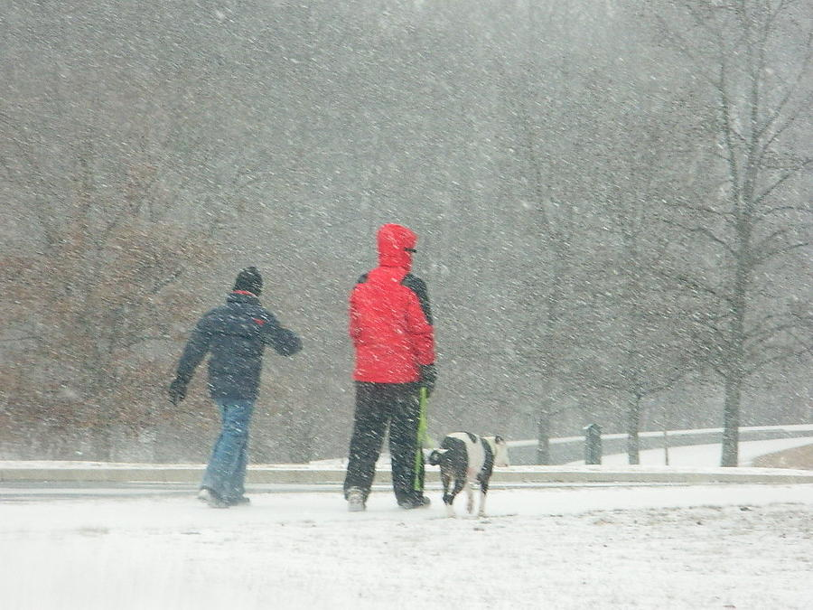 Snowing Photograph - A Winter Walk In The Park - Silver Spring Md by Emmy Marie Vickers