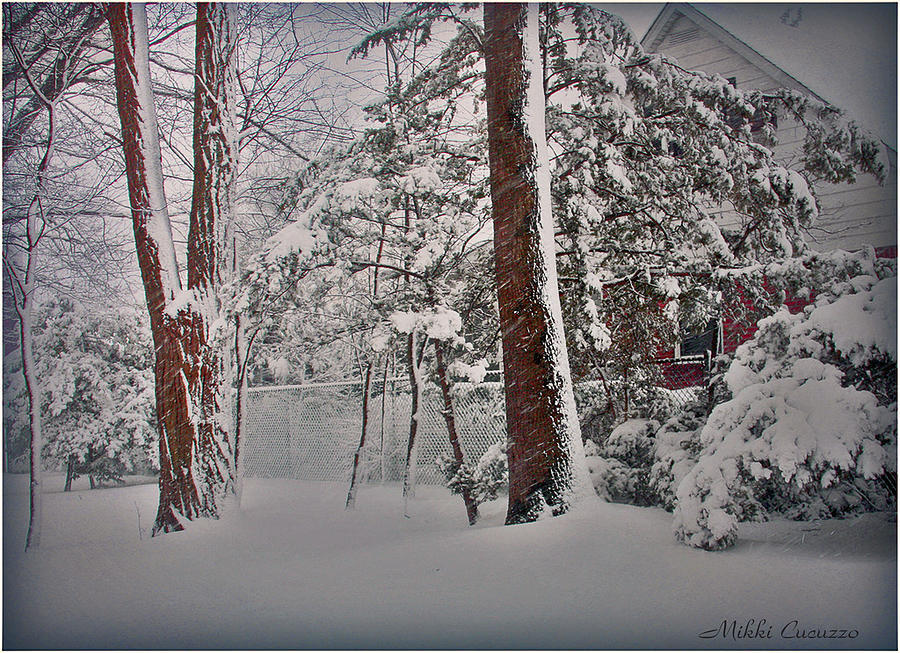 Seasonal Photograph - A Winter Wonderland by Mikki Cucuzzo