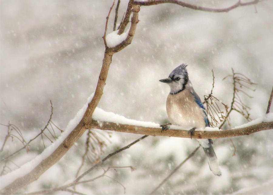 Nature Photograph - A Winters Day by Lori Deiter