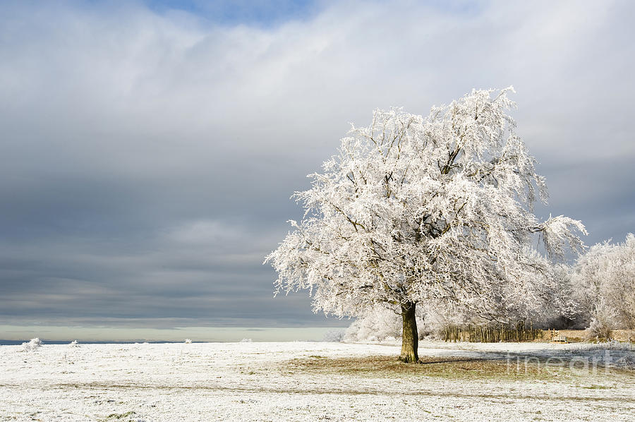 Britain Photograph - A Winters Morning by Anne Gilbert