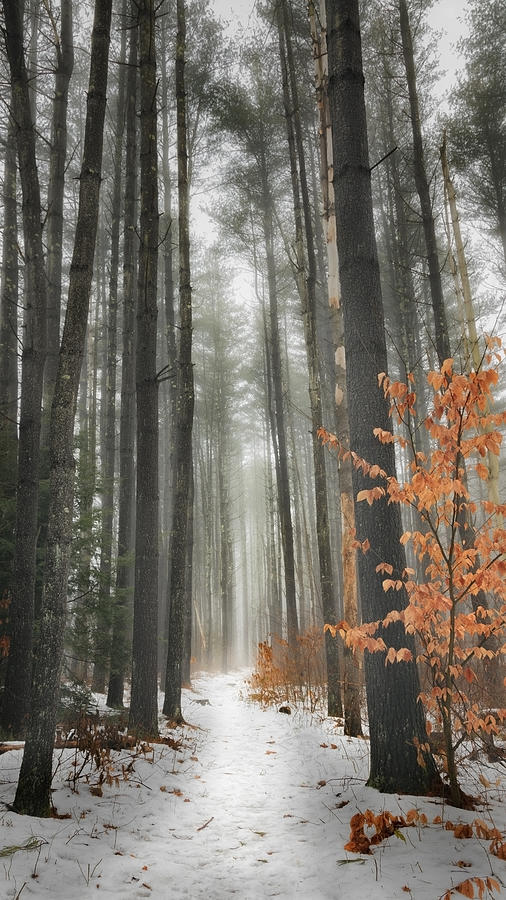 Woods Photograph - A Winters Path by Bill Wakeley