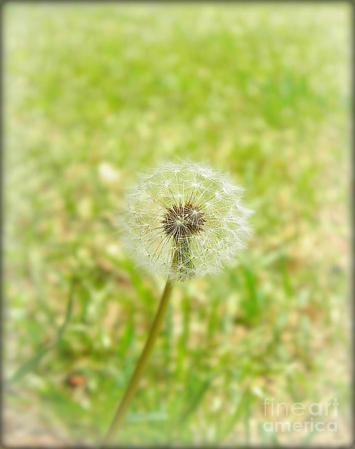 Nature Photograph - A Wish by Lorraine Heath