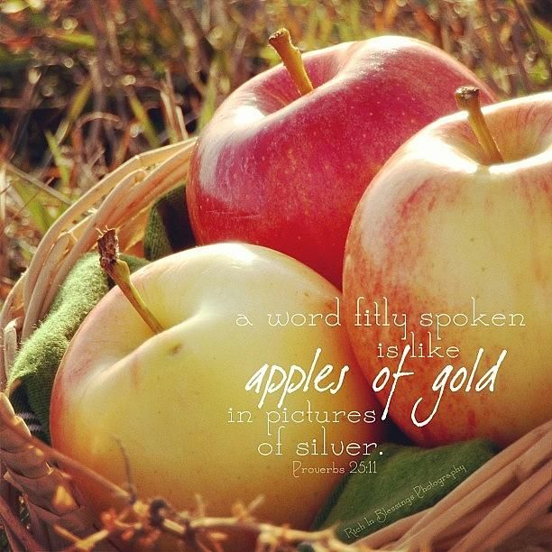 Sunshine Photograph - a Word Fitly Spoken Is Like Apples Of by Traci Beeson