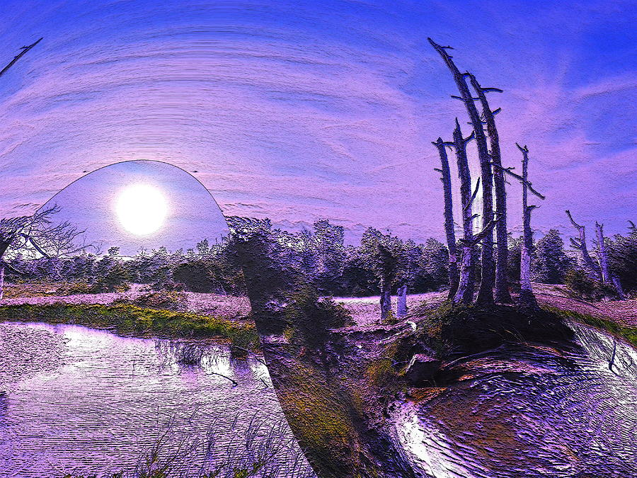 Trees Photograph - A World Within A World  by Yolanda Raker