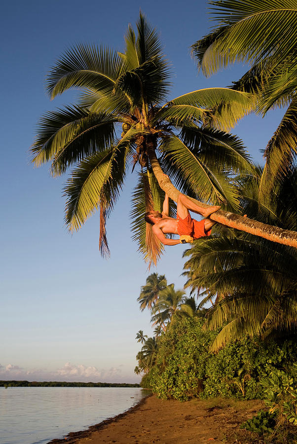20s Photograph - A Young Man Climbs Up A Leaning Palm by Michael Hanson