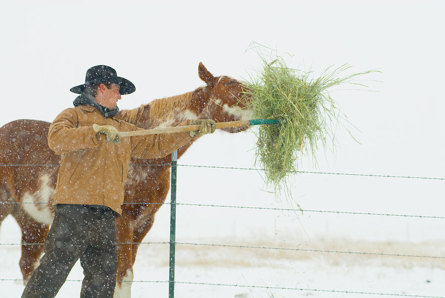 Activity Photograph - A Young Man Feeds His Horse by Jeff Diener