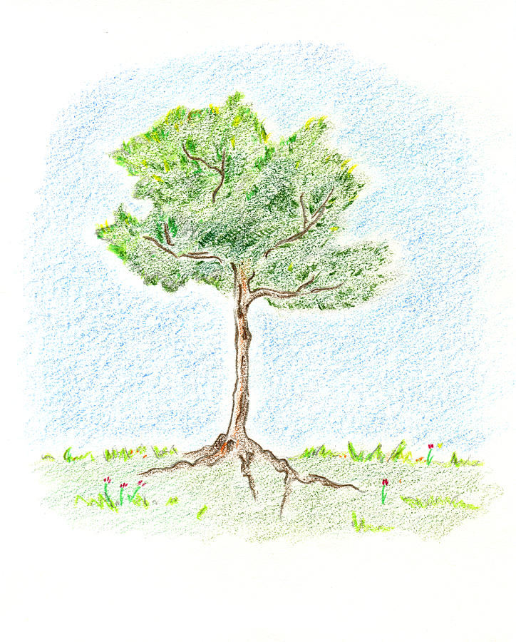 Young Tree Drawing - A Young Tree by Keiko Katsuta