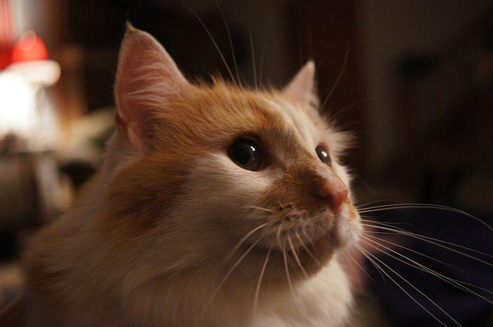 Cat Photograph - Aarik The Great by Kimberly Weninger