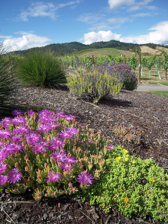 Abacela Winery Photograph