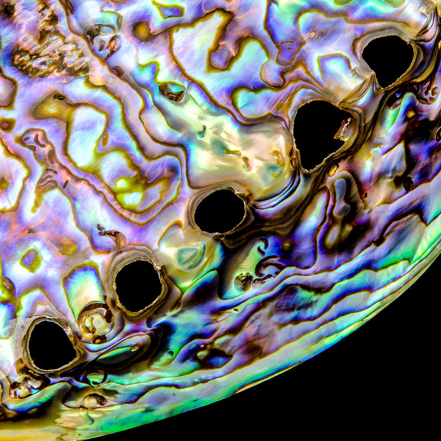 Abalone shell closeup photograph by jim hughes for Fine art photography sales