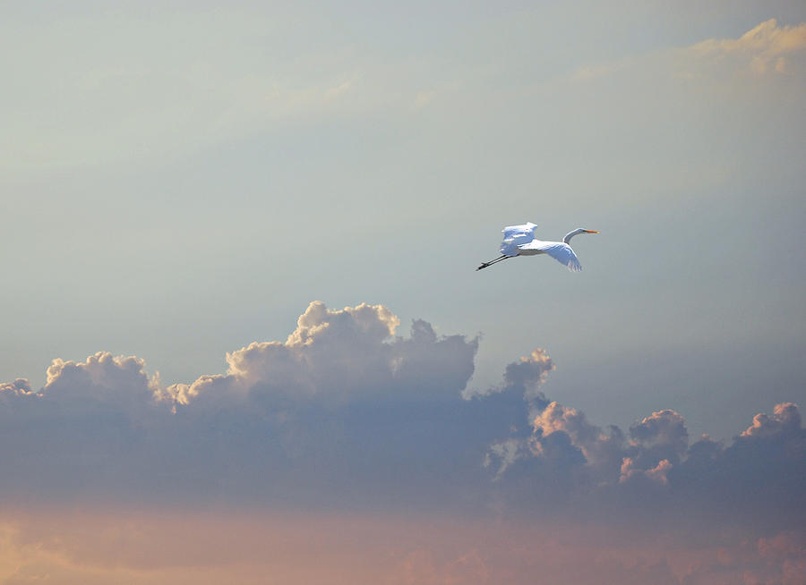 Egret Photograph - Above It All by Adele Moscaritolo