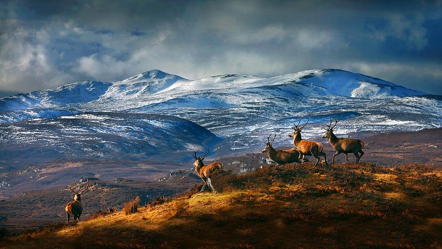 Above Strathglass by Gavin Macrae