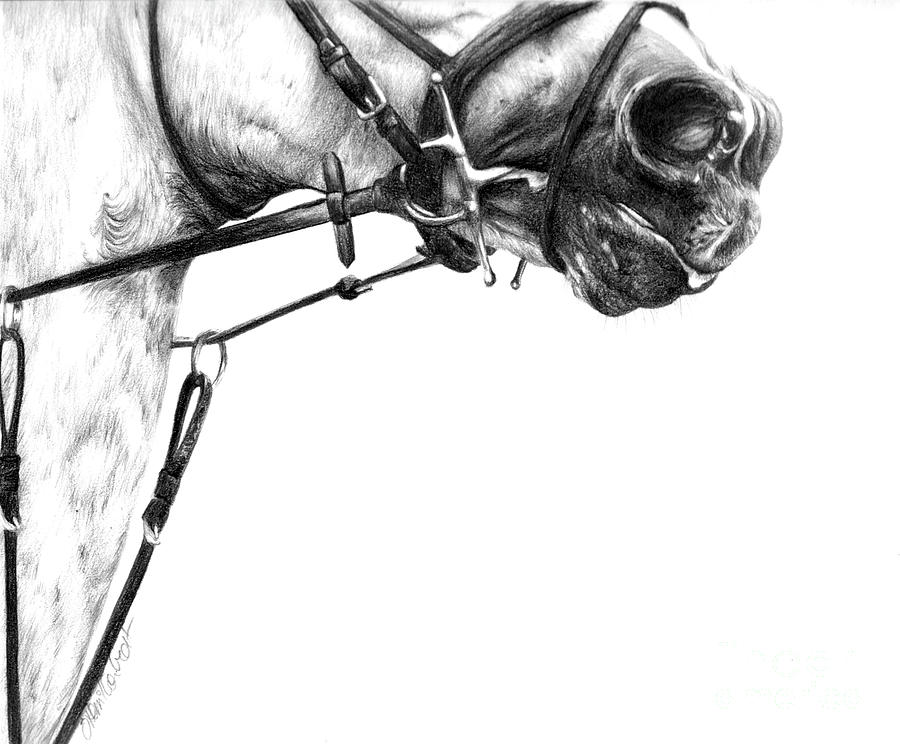 Horse Drawings Drawing - Above The Bit by Sheona Hamilton-Grant