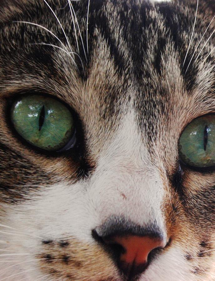 Cats Photograph - Absolute Honesty by Anita Dale Livaditis
