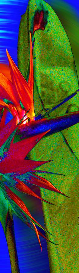 Abstract Bird Photograph - Abstract Bird by Ron Regalado