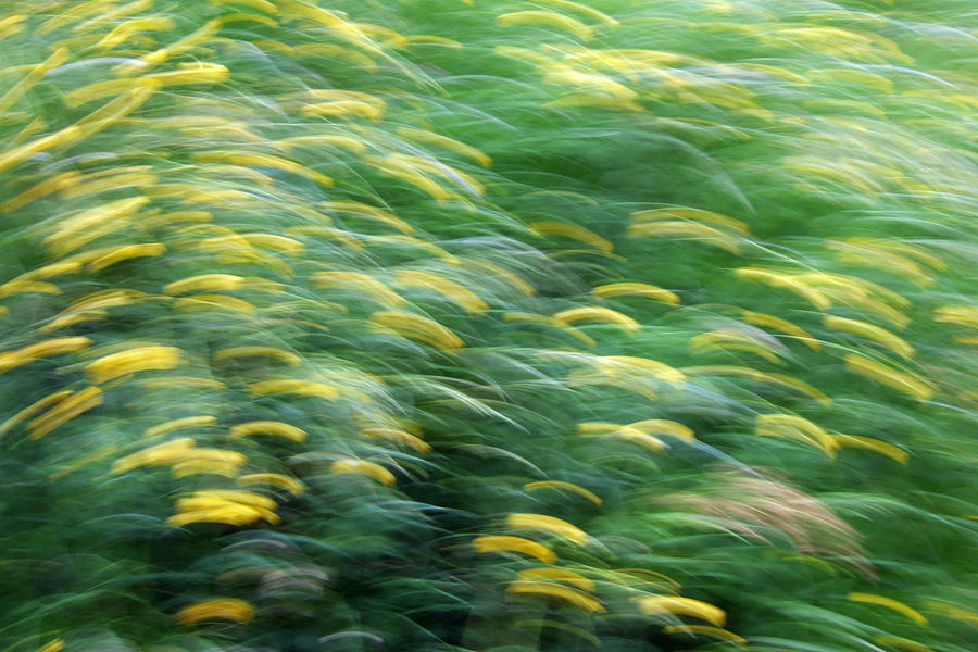 Abstract Blurred Flower Meadow In Spring Photograph