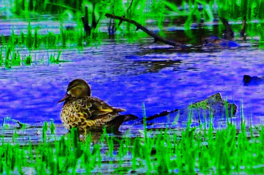 Abstract Photograph - Abstract Duck by Valarie Davis
